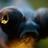 CopperAluminum's avatar