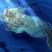 Coeur de Mirabelle's avatar