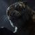 Scourge the Dark Claw's avatar