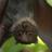 LukoCerante's avatar