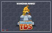 Boomerangmonkey