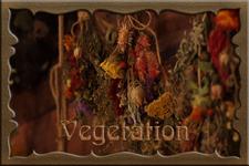 Category:Vegetation and Ecosystem