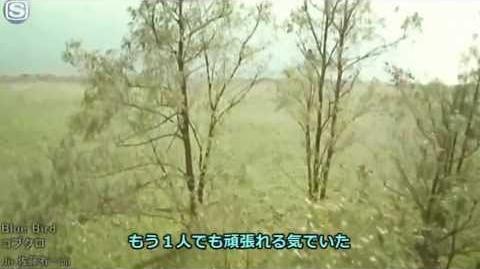 Bakuman Opening 1 Blue Bird Kobukuro Full ver + Download Mp3 HD
