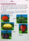 Kazoo Development Documents 06 - Fruit Houses