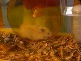 Zippity the Hamster