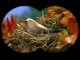 The Little Bird