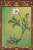 Nameless Flower.png