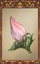 Flower Bud.png