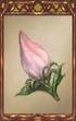 Flower Bud.png