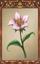 Pretty Flower.png