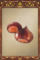 Chestnuts.png