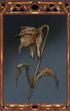 Dead Flower.png