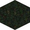 Forest.png