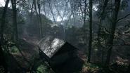 Argonne Forest 07