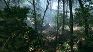 Argonne Forest 18