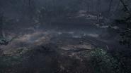 Argonne Forest 06
