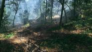 Argonne Forest US Deployment 01