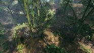 Argonne Forest Frontlines Creek 01