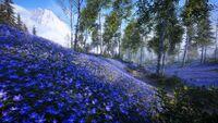 BF5 Halvoy Blue Forest.jpg