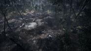 Argonne Forest 04