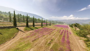 Provence 35
