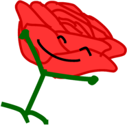 Rose from bush