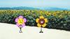 Flower in the Sunflower Field