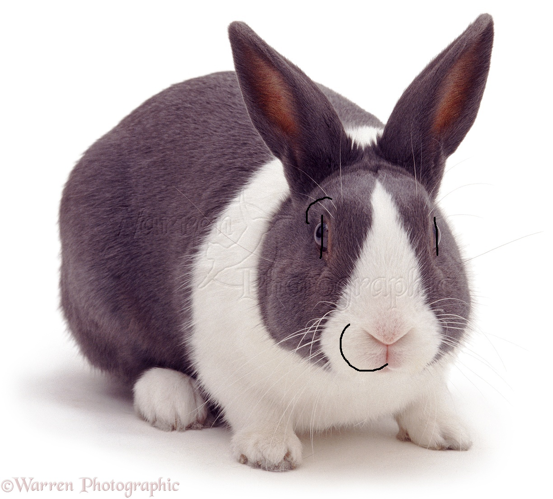Bluey The Rabbit