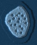 Mult03 shell