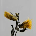 Imponderabilia/brudnopis