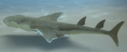 Angel shark prehistoric