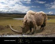 Woolly Rhinoceras