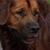 Rileyisdabestdog