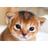 SimplySmol's avatar