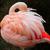 Flamingo4Lover
