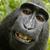 Monkey tseu