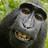 Monkey tseu's avatar
