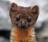 Sobolí Ucho's avatar