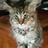 CrystalDragon14's avatar