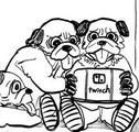DogPug