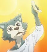 Legoshi a los 7 años (Anime)
