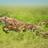 Dinofer270's avatar