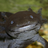 Аксолотль's avatar