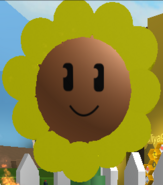 SunFlower Face