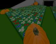 Pumpkin Patch New