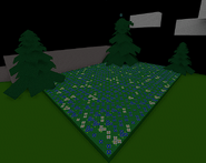 Pine Tree Forest New