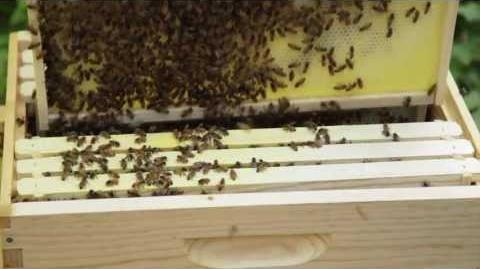 Beekeeping for Beginners - Adding Bees