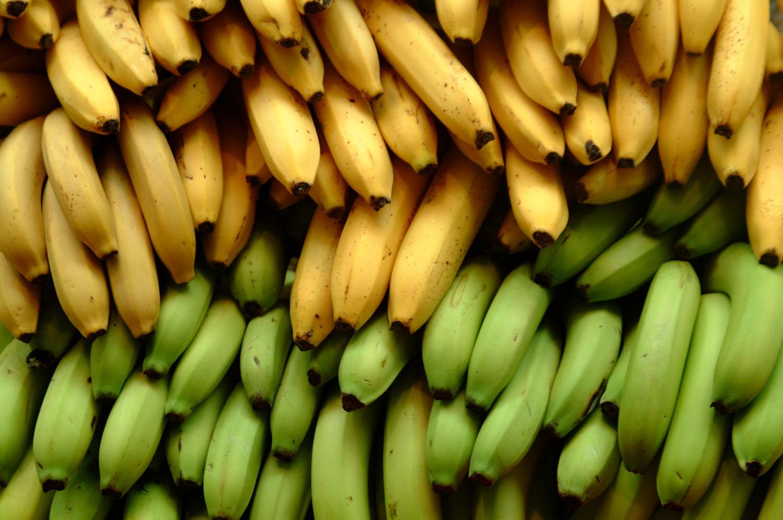 Bananasapiens