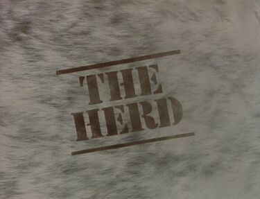 Herd000.JPG