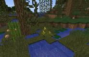 Trillium (Swamp)